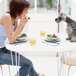 Healthy Tips With Pets